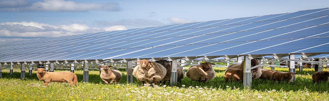 Ablaze-Solar-PV-System-Farms-Agriculture-sector
